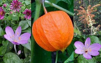 fleurs23092010.jpg