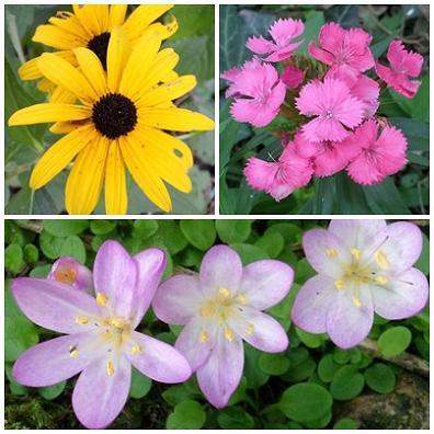 fleursseptembre2011.jpg