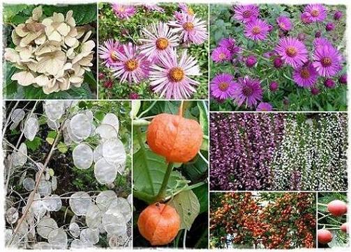 fleurs10102011vert.jpg