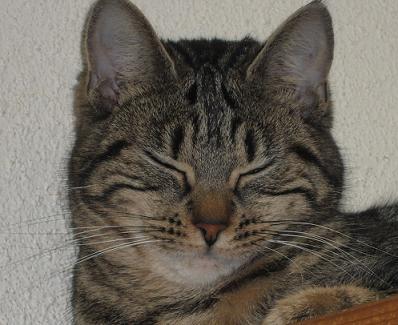 Filou-14-01-2012 dans Animaux (mes félins)