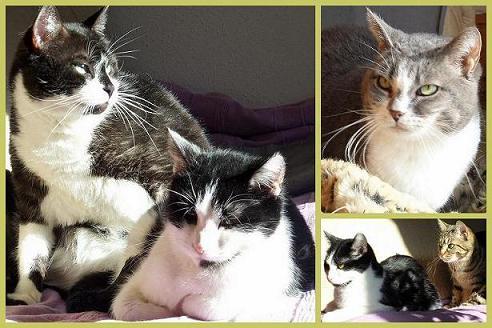 Mes-chats-au-soleil-12-02-2012 dans Animaux (mes félins)