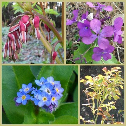 Floraisons-naissantes-05avril2012