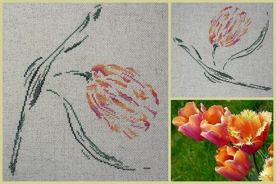 Fleur de saison dans Nature (Faune et flore) Tulipe-MTSA-20Avril2012