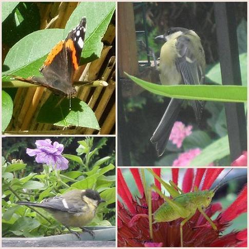 Papillon-Mesange-Sauterelle-07-2012