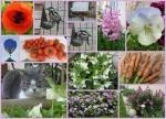 <b>Faune et Flore 2013-2014</b> <br />